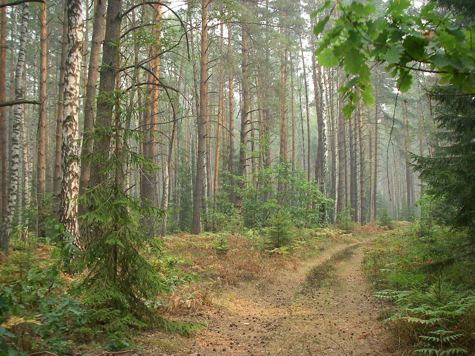 Фото красивый лес московской области 3
